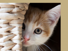 Котешки тоалетни и аксесоари