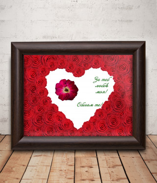 A real red rose framed for a beloved woman