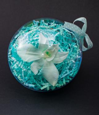 Истинска орхидея в цветна сфера