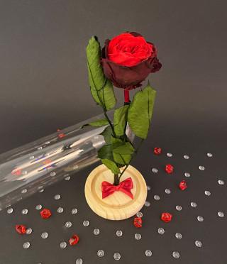 Английска роза в стъклен купол