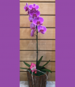 Орхидея с декорация