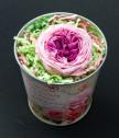 Английска роза в метална кашпа с послание