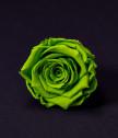 Роза в клетка