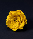 Вечна роза в прозрачна кутийка