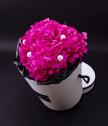 Вечна розова хортензия